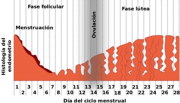 dias de ovulacion sintomas de diabetes