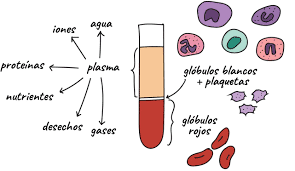 Plasma sanguíneo
